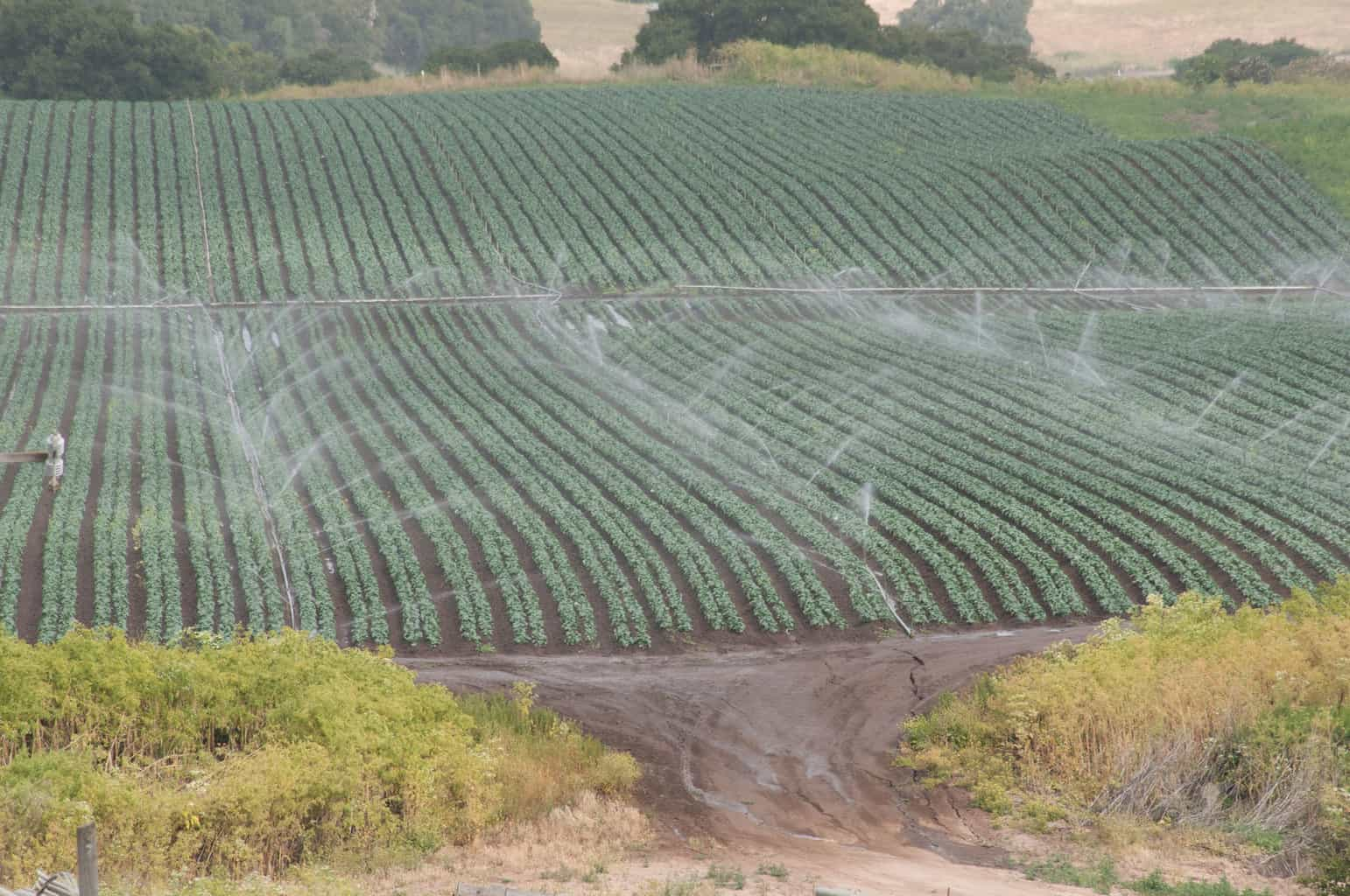 Photo of Reefer rates climb out of Salinas, Central, and Imperial Valleys