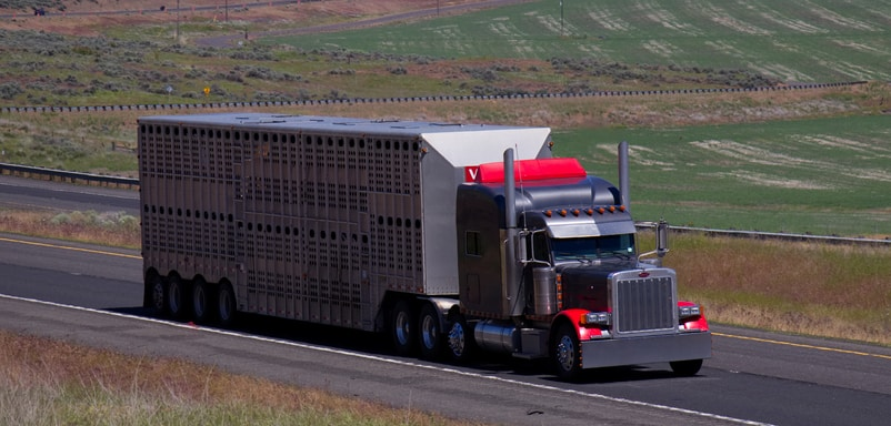 Photo of Livestock groups ask DOT for 15-hour driving days