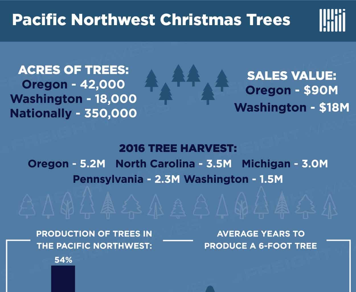 Photo of The Christmas Trees of the Pacific Northwest