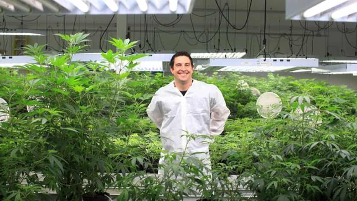 Photo of Canopy Growth reports better retail cannabis availability as revenues soar