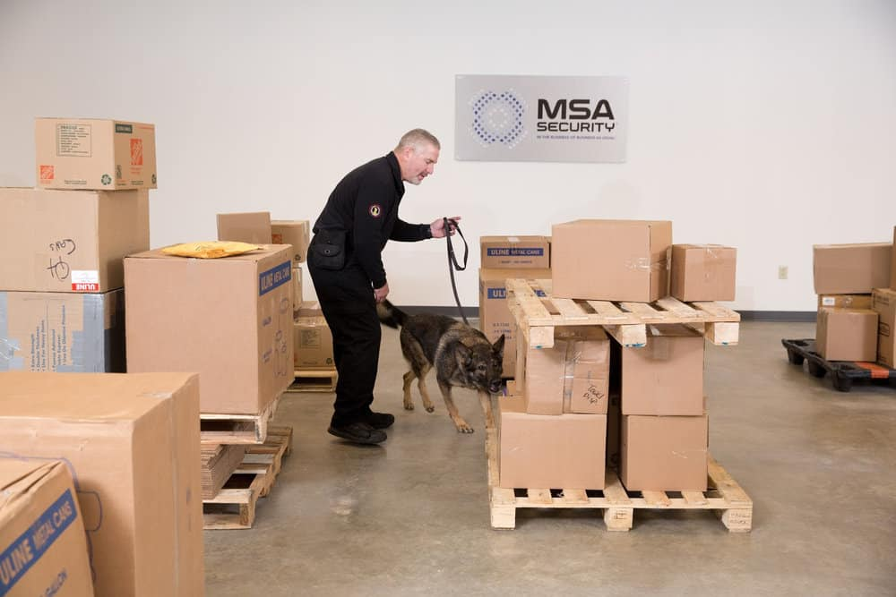 Handler training a dog for cargo screening. PHOTO COURTESY OF MSA Security