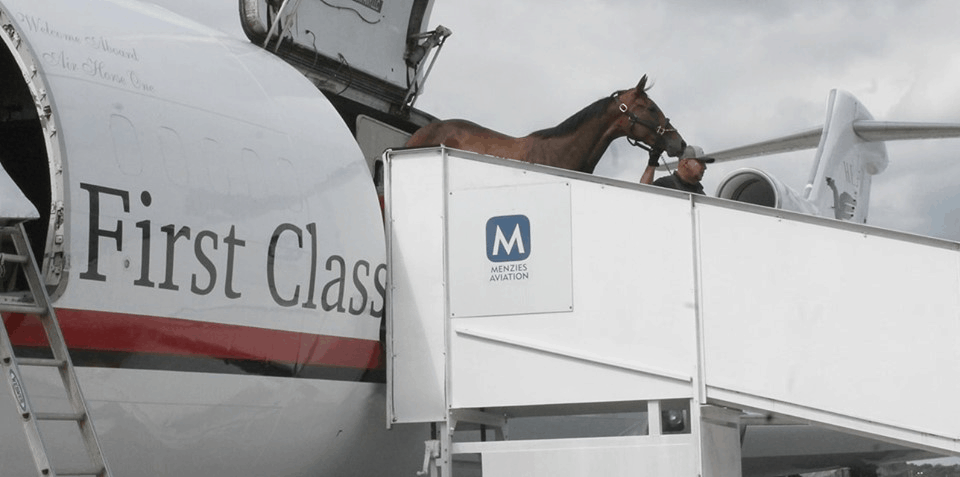 That horse can really fly! - FreightWaves