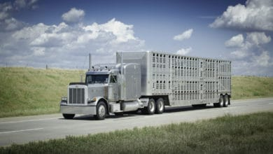 Photo of Trump administration seeks clarity for ag and livestock haulers