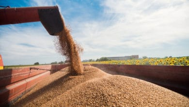 Photo of U.S. soybean sales could bolster dry bulk