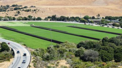 Photo of Commentary: Train to nowhere destroys valuable agricultural production