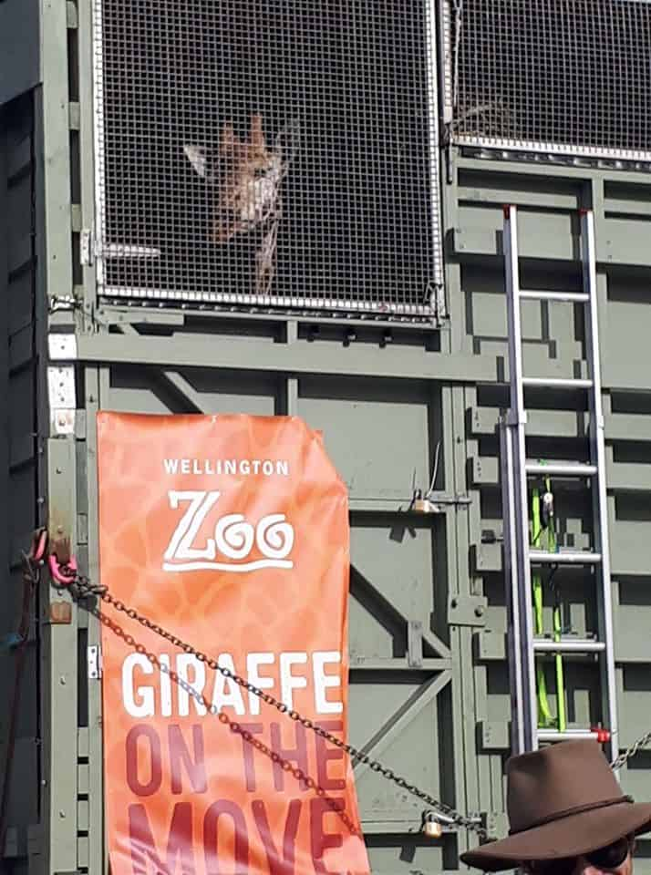 From A to Z: How animals get to aquariums and zoos, and