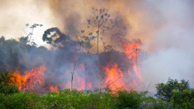 Photo of The Amazon rainforest is on fire and burning out of control