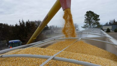 Photo of Japan agrees to buy more U.S. corn under trade deal