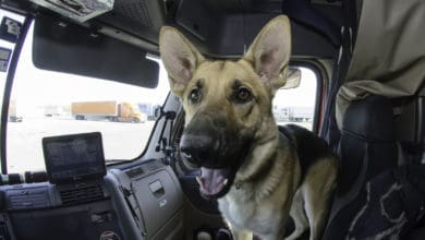 Photo of Carrier agrees to pay $22,500 to settle truck driver's EEOC lawsuit over service dog