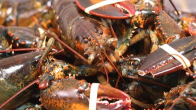 Photo of Ohio logistics firm on the hook for $300,000 in lobster heist