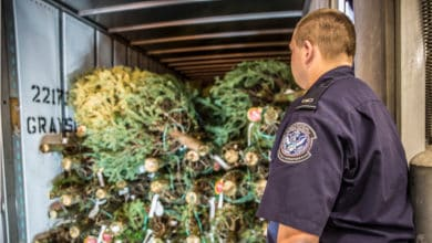 Photo of Mexico tops list of international importer of Christmas trees from Oregon and Washington