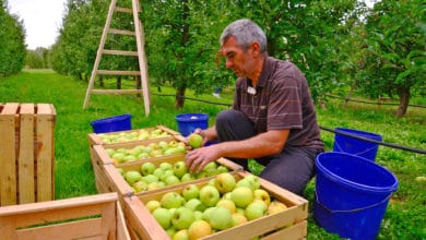 Photo of Borderlands: Mexico's demand for US apples rises; Pharr International Bridge is No. 3 land trade hub in Texas