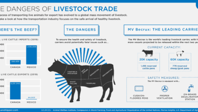 Photo of The Dangers of Livestock Trade