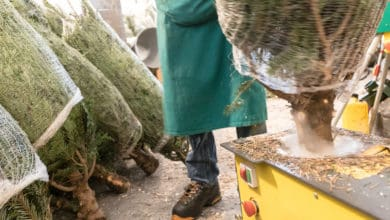 Photo of Online Christmas tree shops can take the hassle out of the holidays (with video)