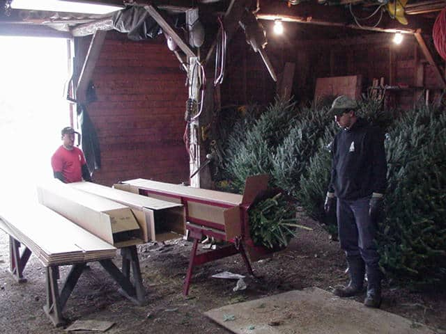A photograph. Two men stand next to three long cardboard boxes. One of the boxes has the tip of a pine tree sticking out of the opening. Next to them are Christmas trees leaning against a wall.