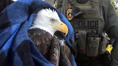 Photo of Today's Pickup: Trucker recounts harrowing bald eagle strike on I-95 — and miraculous outcome (with video)