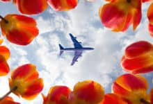 Looking up at plane overhead through circle of red flowers