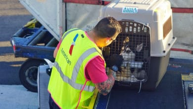 A cargo handler moves a pet crate on airport tarmac.