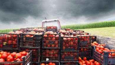 Photo of Mexican tomatoes face more scrutiny at the border starting April 4