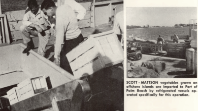 Photo of FreightWaves Flashback 1963 – Offshore vegetable farms moved from Cuba
