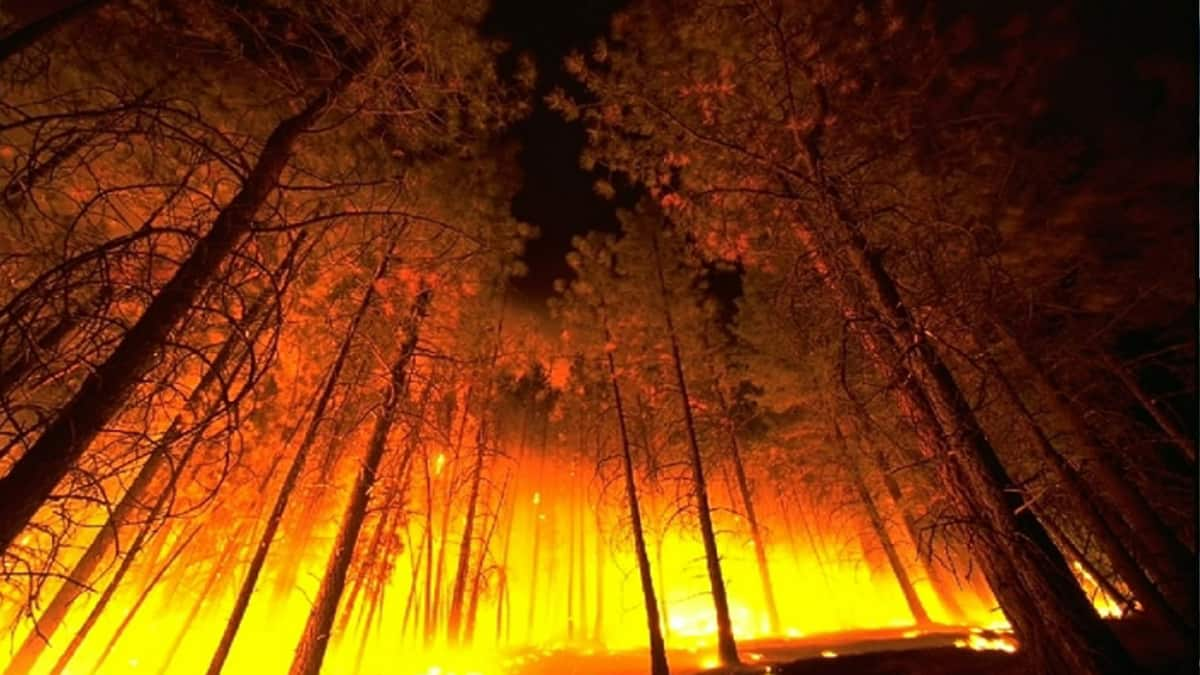 Wildfire in wooded area.
