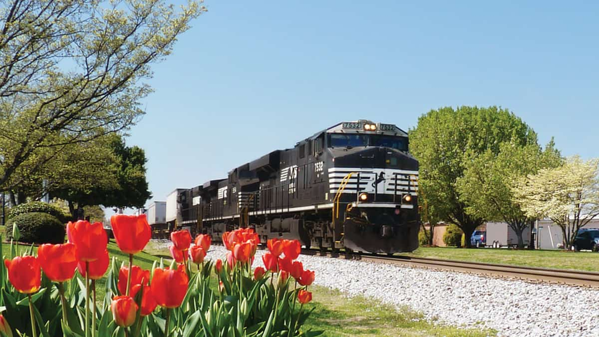 A photograph of a Norfolk Southern train on a train track. There are tulips next to the track.
