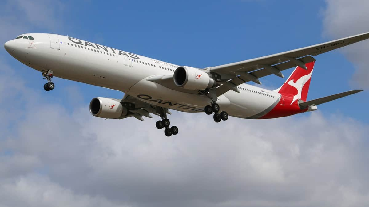 A white Qantas jet with red tail comes in for landing on bright day with wheels lowered. Qantas carries freight in its passenger planes, but it's freight station in Melbourne has been closed because of COVID.