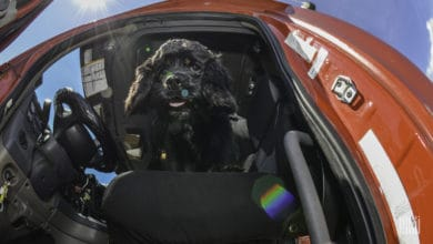 Photo of FMCSA denies exemptions for drivers traveling with pets