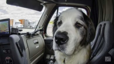 Photo of K9 co-pilots: What to consider before before hitting the road with Fido
