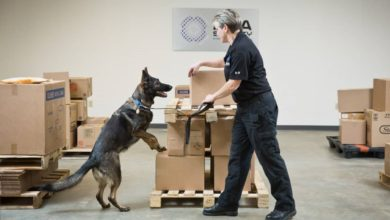 An explosives-sniffing dog on hind legs checks a carton in a warehouse.