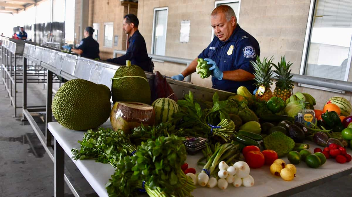 A third temperature-controlled federal import inspection facility is set to open in Laredo, Texas, for cross-border produce from Mexico. Pictured are Customs and Border Protection agents in McAllen, Texas. (Photo: CBP)