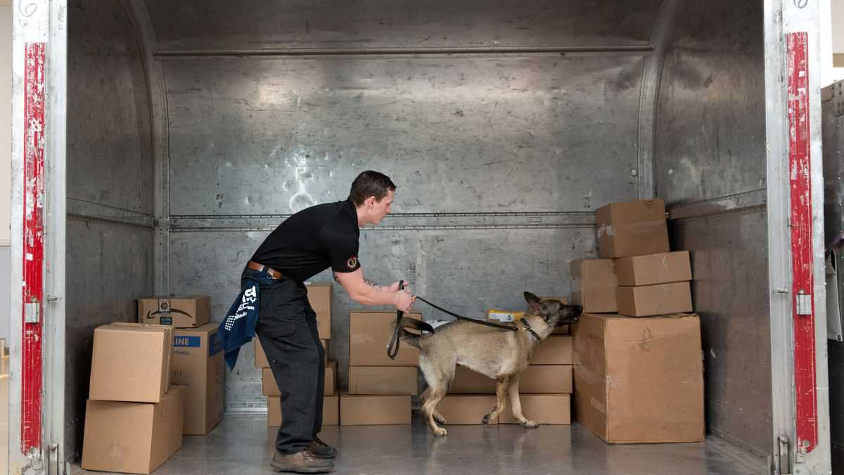 A canine team inspect boxes inside an air shipping container for explosives.