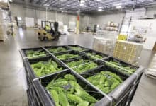 Food stocks remain pressured as producers struggle to ramp production