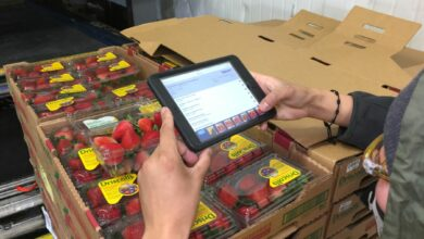 A sheet of strawberry cartons being scanned by a warehouse worker.