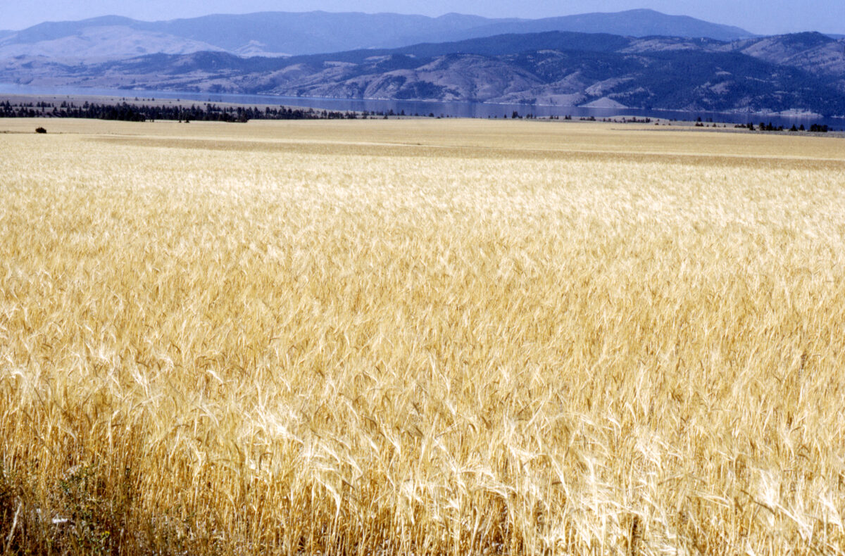 Canadian Pacific, CN argue which is better for grain shippers