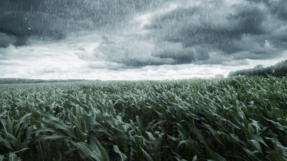 Floods drown south-central US crops