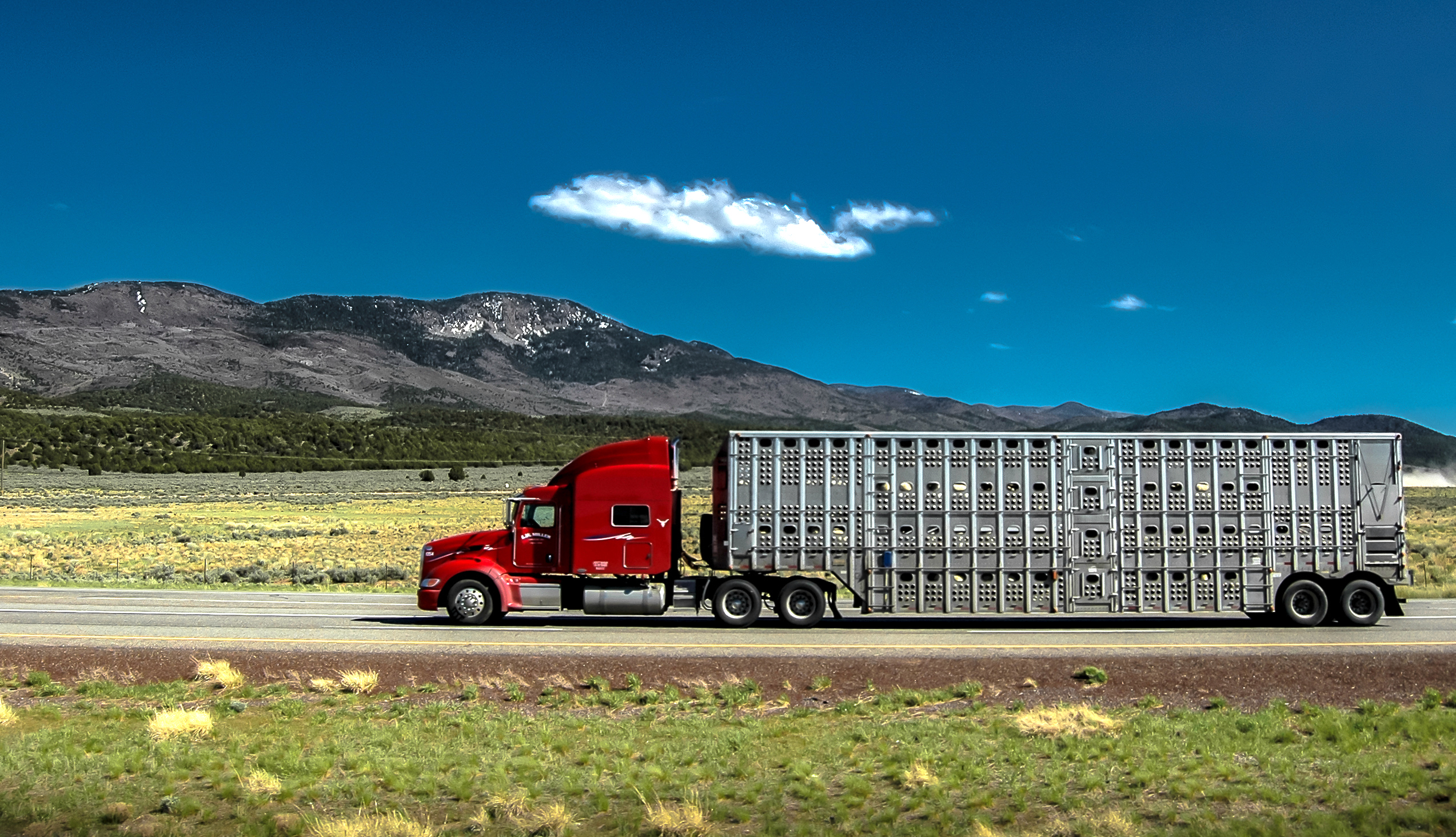 A truck transports live cattle in illustrate an article about the impacts of the JBS cyberattack on livestock haulers
