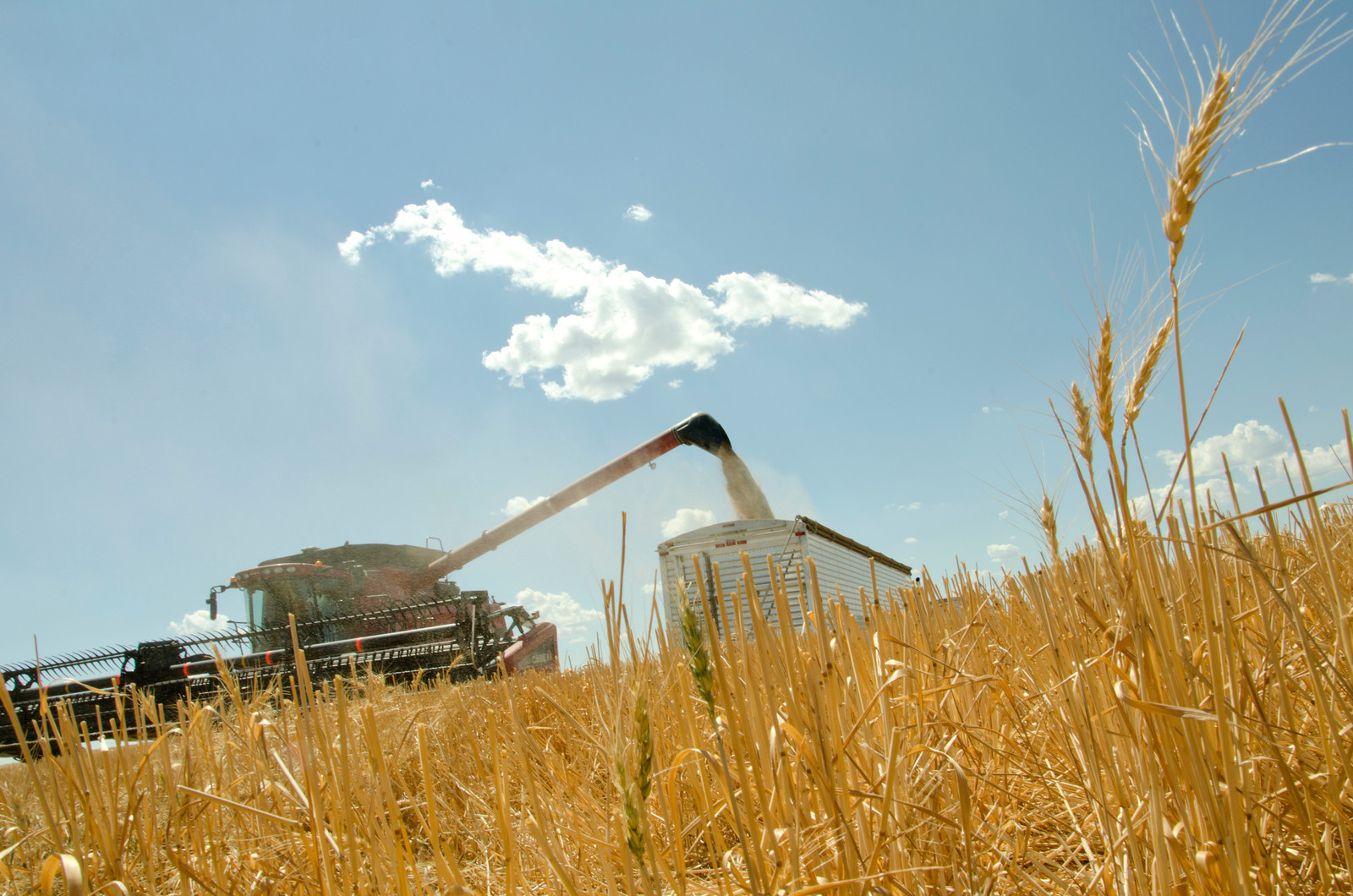 A photograph of a combine harvester collecting grain in a field.