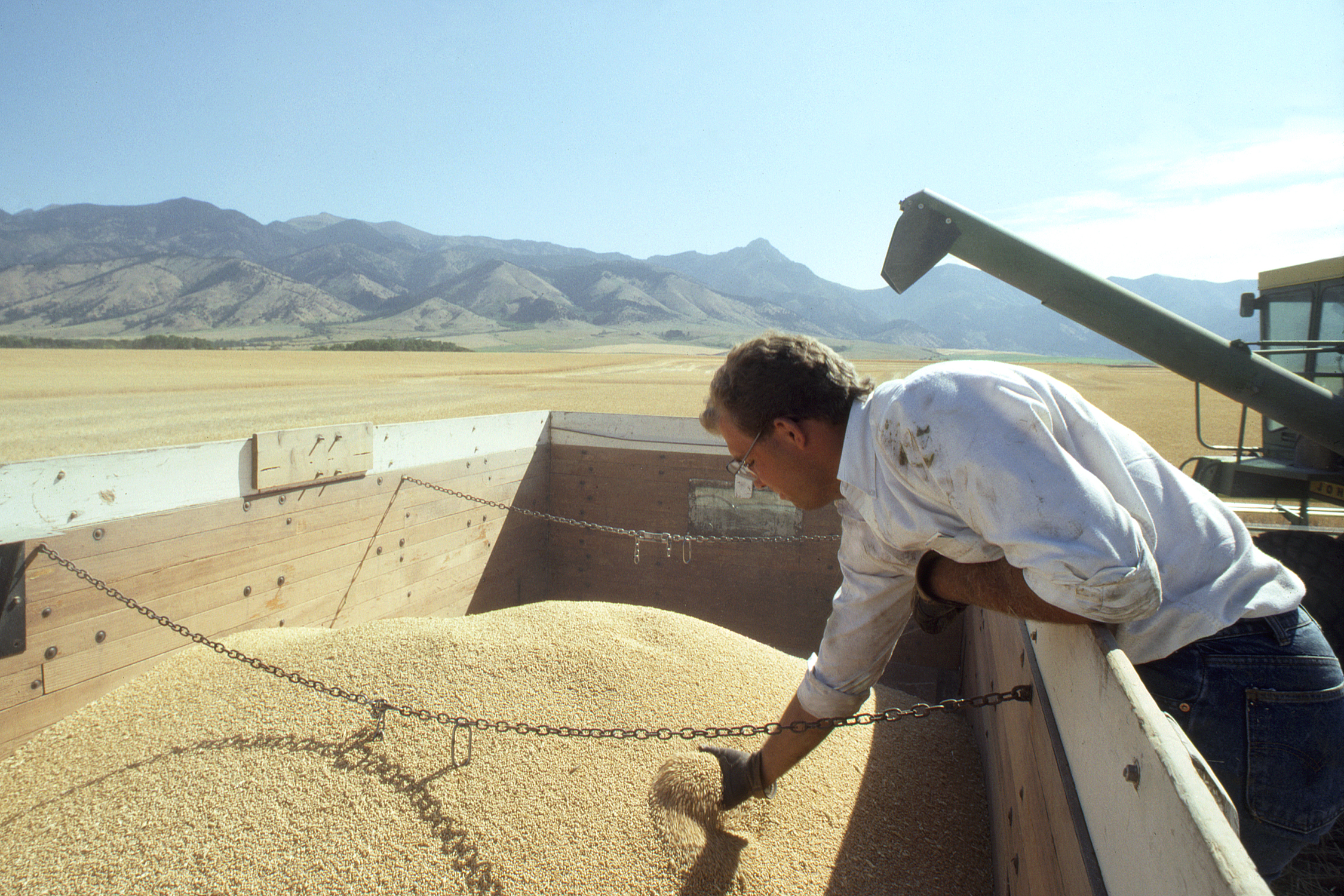 A photograph of a man looking at a truckload of grain.