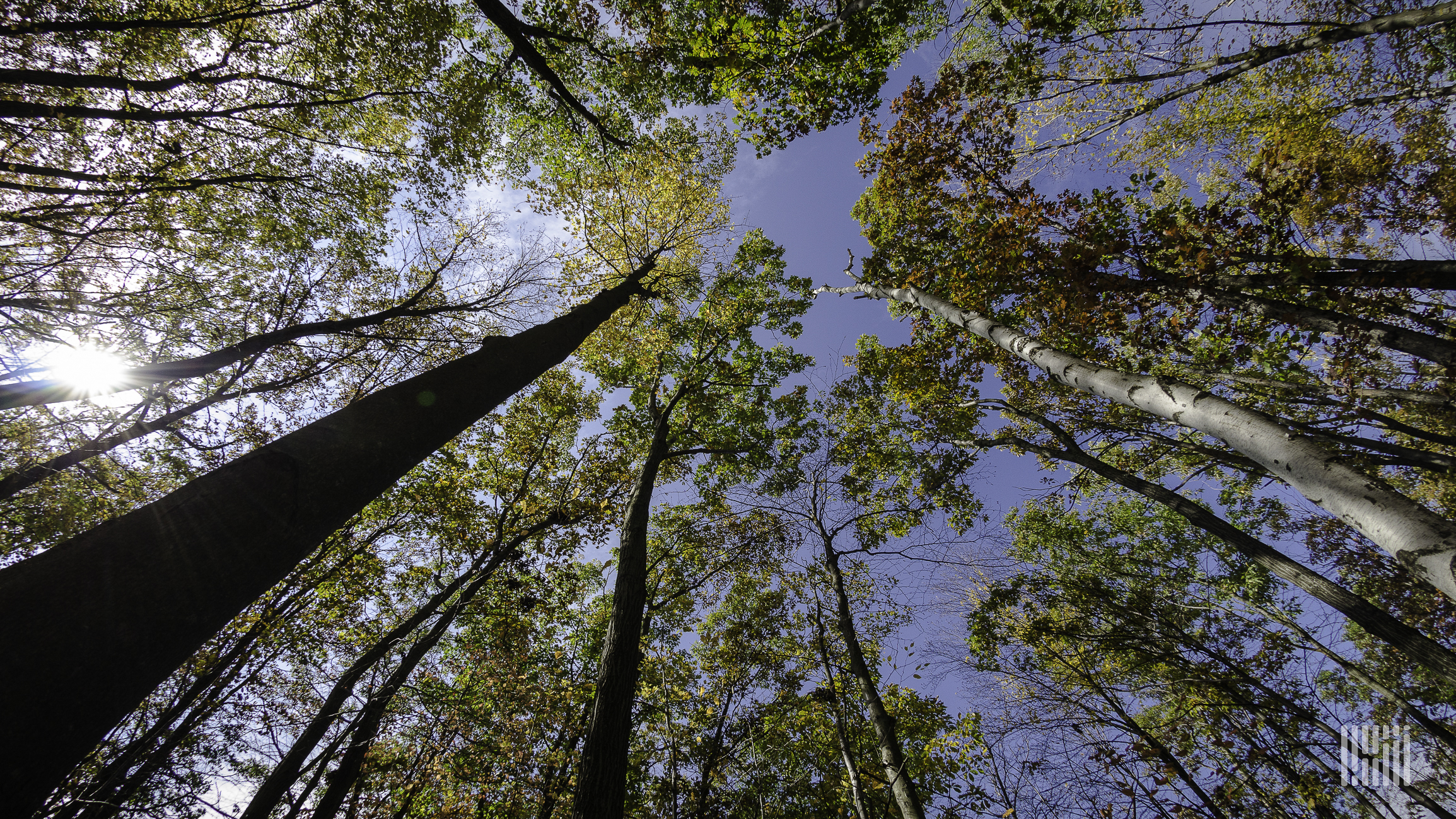 A photograph of a canopy of trees.