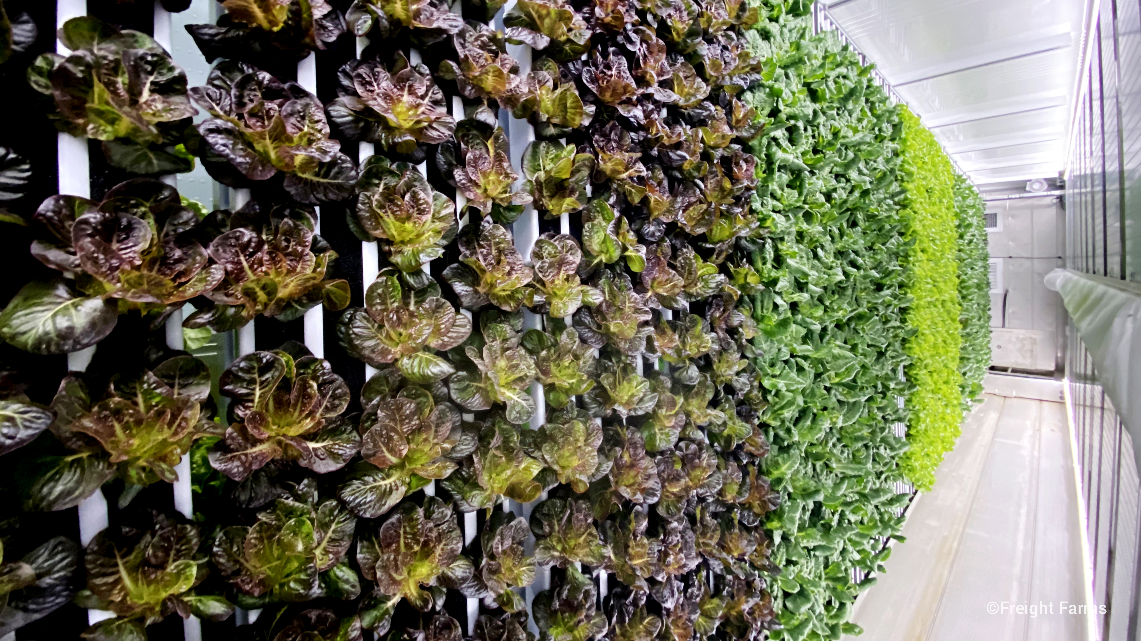 Freight Farms is turning shipping containers into hydroponic farms.